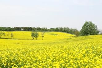 농협 안성팜랜드, 초록 초록 안성호밀밭축제!