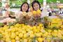 농협유통, 국내산 레몬 첫 출하!
