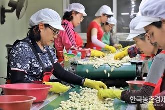 과잉생산 '마늘' 해외 수출시장 찾아라