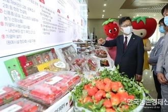 딸기 수출경쟁력 높다...'딸기 수출혁신 전진대회' 가져
