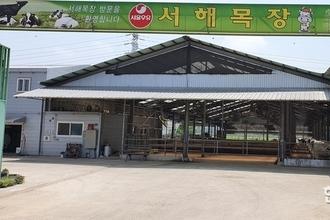 서울우유서해목장 '축분냄새' 확 줄이는 노하우(?)