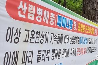 송충이-매미나방 '극성'...산림당국 방제 더 서둘러라!