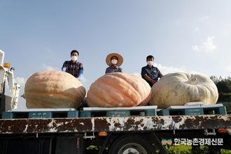 10명 중 4.5명 '추석차례 지낸다'…농식품 선물비용은 17만원 꼴