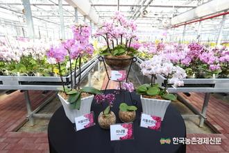 고구마 신품종 '소담미' 개발