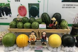 '애플수박까지'... 이색 기능성 수박 즐비