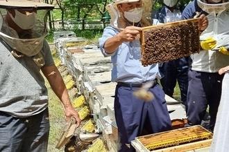 양봉농가 희소식... 꿀벌 바이러스 소독제 나왔다!