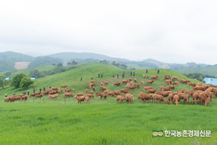 """축산용 '항생제' 판매량 736톤... """"여전히 우려"""""""